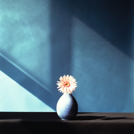 African Daisy, 1982, Dye Transfer. Copyright: Robert Mapplethorpe Foundation. Mapplethorpe Flora:The Complete Flowers, Phaidon (page 217).